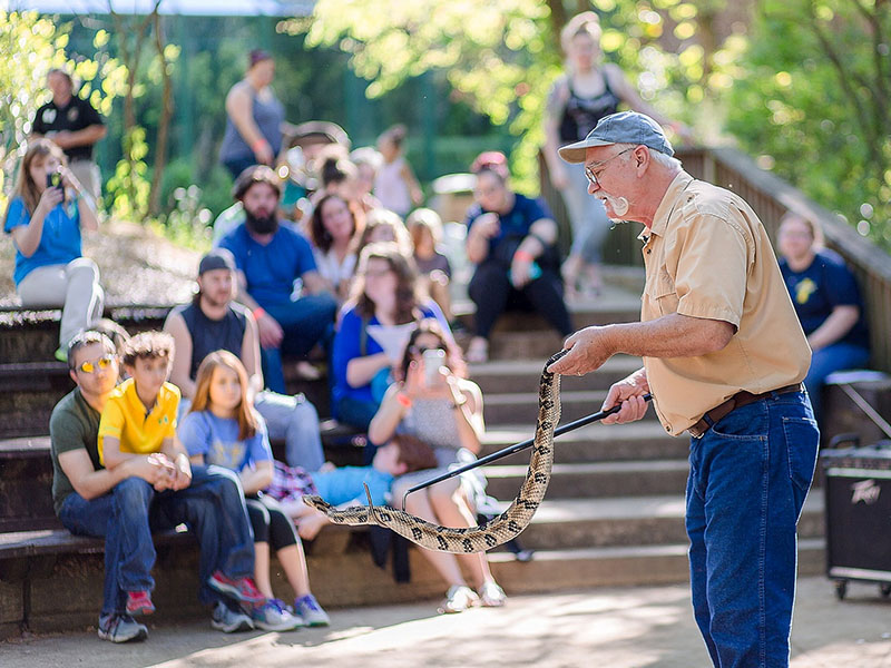 Terry Vandeventer showing snakes to zoo patrons