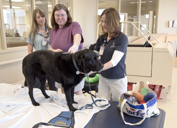 Mandy Owens, center, a patient at Methodist Rehabilitation Center, works on her arm strength by brushing Puma, under the guidance of Jenn Sivak, right, and occupational therapist Lindsey Parker, left.