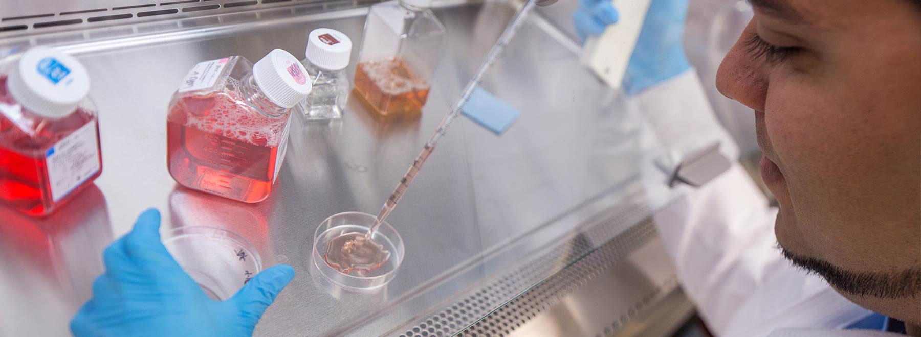 A researcher uses a pipet to conduct an experiment at a lab bench