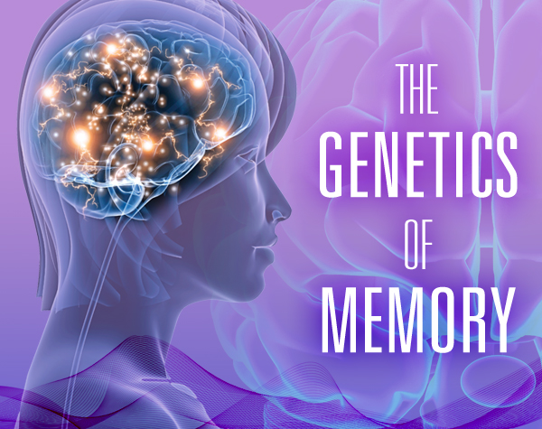 Researchers uncover clues to memory performance in international genetic study