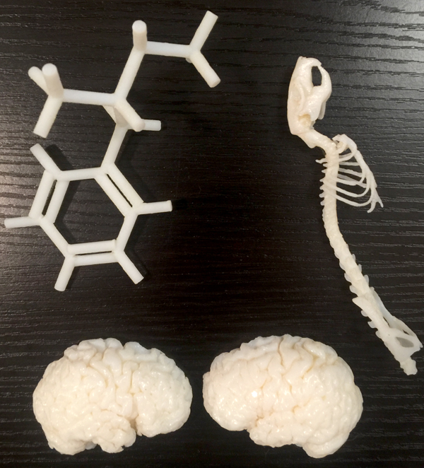 These 3-D printed models are, clockwise, from top, the skeleton of a rat, the down-sized hemispheres of a human brain and a representation of the molecular structure for methamphetamine.