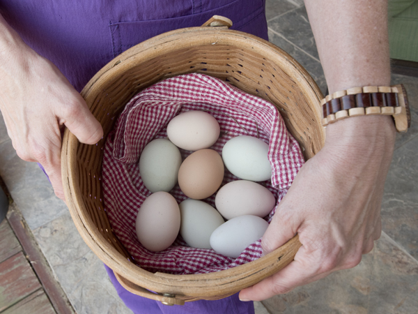 The chickens provide fresh eggs for family and friends, about seven per day in the summer, MacSorley said.