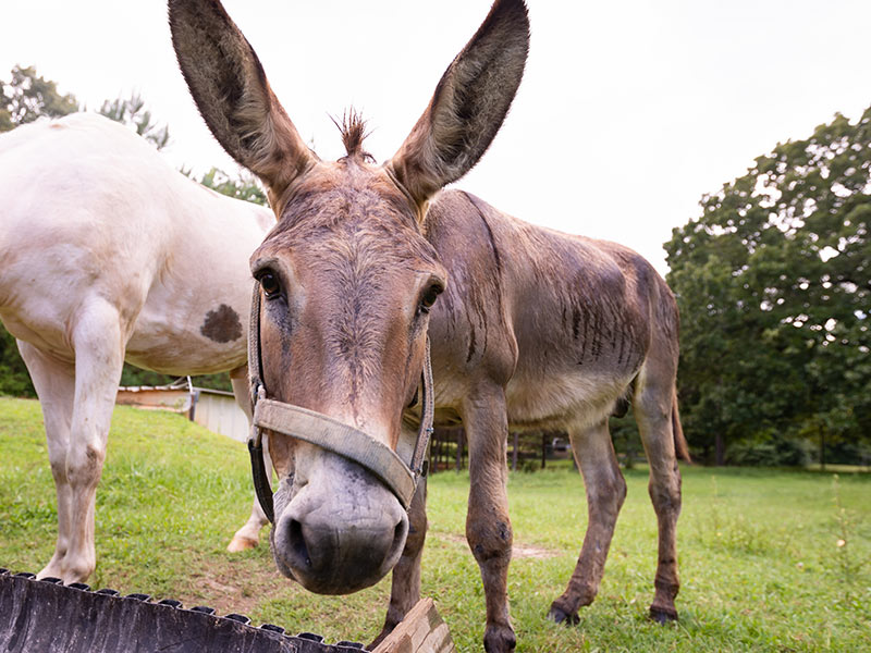 AirCare, blood clotting drug save man from death by donkey