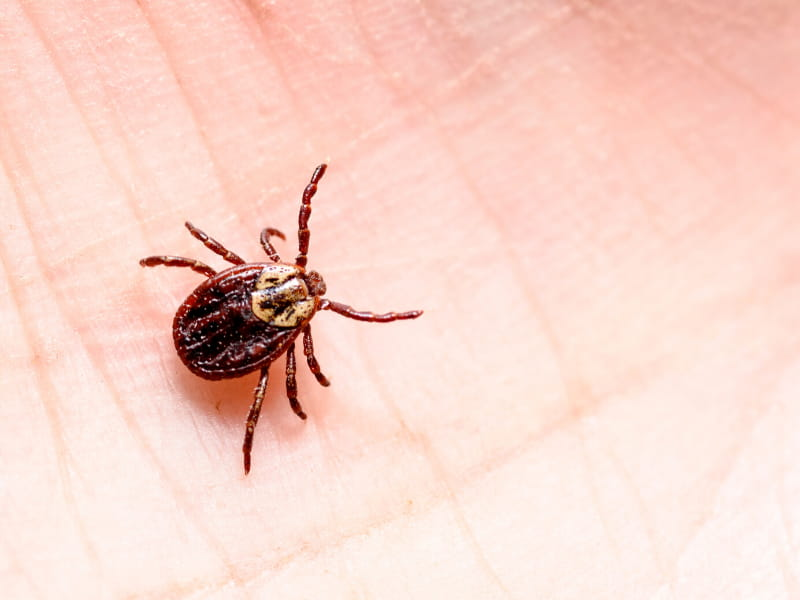Tick, tick, tick – time is short when these arachnids attack